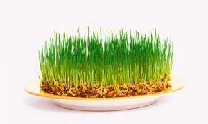Очищение организма проросшими зерновыми ростками